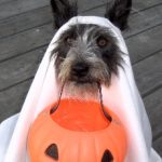 Last Minute Dog Halloween Costumes