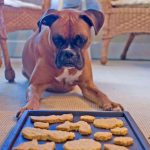 Homemade Halloween Dog Treats