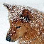 Keeping Dogs Cozy & Safe in the Winter Months