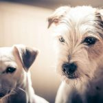 What Dogs Know About Fairness