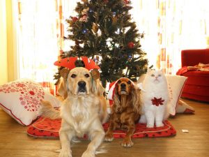 holiday pets woof report