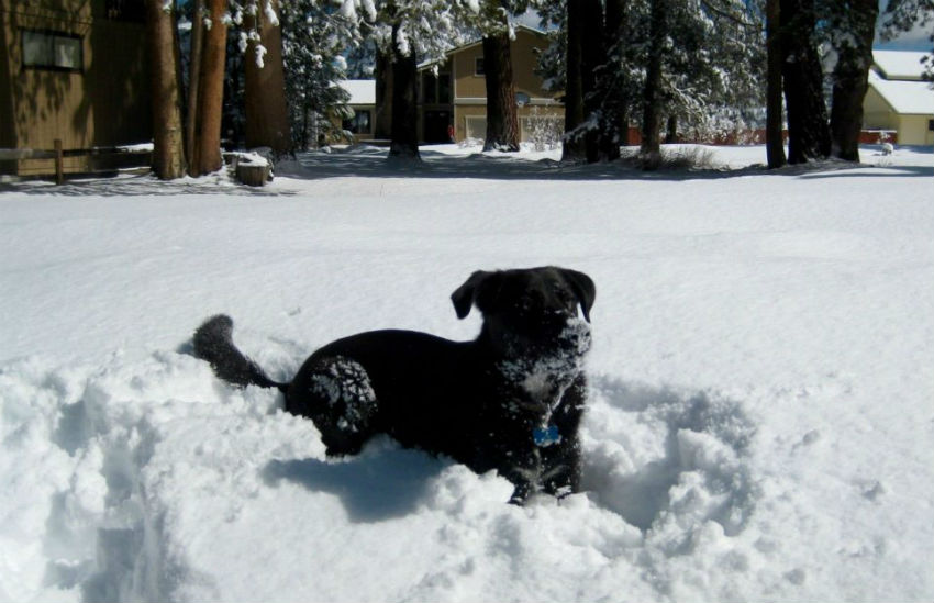 How To Treat Hypothermia In Dogs