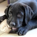 Fun Indoor Games for Your Dog that Teach Too