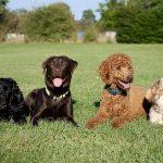 Expert Training Tips for Raising a Friendly Dog