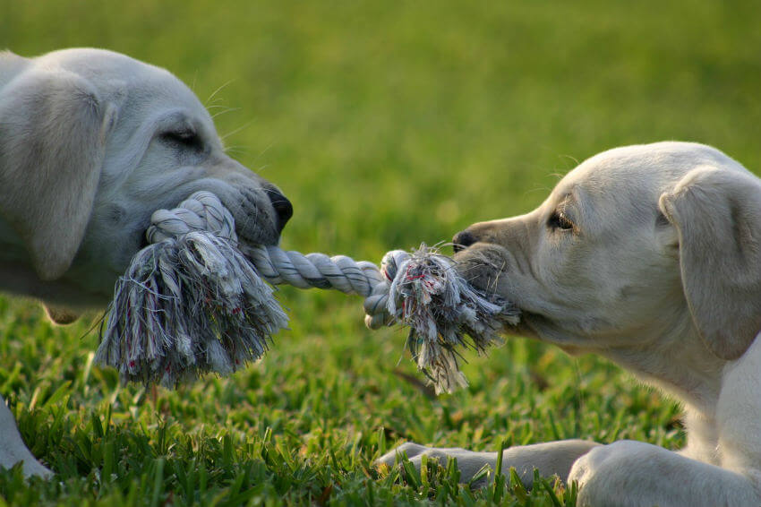 How to play tug of war safely?