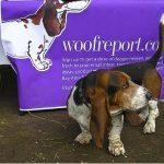 Woof Report News Flash