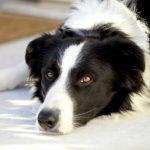 The Top Ten Smartest Dog Breeds