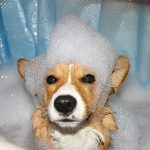 Training Your Dog to Love the Bath