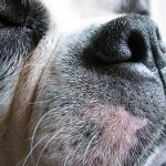 The Wonderful World of Dog Whiskers
