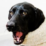 Calming Signals Your Dog Sends You