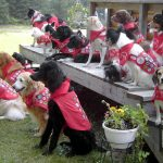 Fun & Learning at Dog Scouts