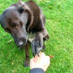 Teach Your Pup This Cute Dog Trick 'Which Hand Holds the Treat'