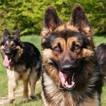 Dogs Can Sniff Out Family From Friends