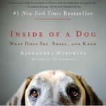 Brilliant New Book Explores Dogs' World View