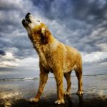 New Study Decodes the Evolutionary Reasons for Barking