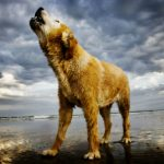 Research Study Decodes the Evolutionary Reasons for Barking