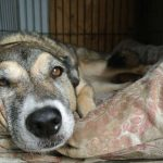 Warm Up to Kennel Comforter Programs