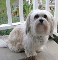 Top Dog Lola