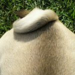 How Dog Tail Size Impacts Dog Communication
