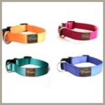 Fresh and Fun Spring Dog Collars