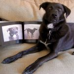 Create a Book to Showcase Your Dog's Good Looks