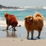 25 Things to Do With Your Dog this Summer