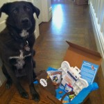 Delight Your Dog with a Subscription to BarkBox