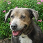 Help a Senior Dog and Watch Your Garden Bloom