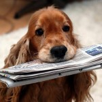 Fascinating Dog News from Around the World