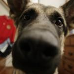 Top Ten Human Medications Harmful to Pets