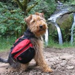 Hit the Hiking Trails with Your Dog