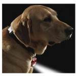 Stay Safe with Dog Gear to Brighten the Night