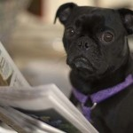 Notable Dog News from Around the World
