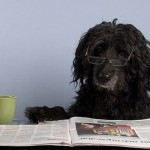 The Latest Dog News Round Up