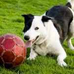 Effective Signals to Entice Your Dog to Play