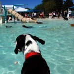 Dog Swim Days Welcome Water Dogs & Dog Paddlers