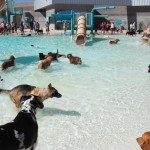 Dog Pool Days are Here, Find One in Your Area!