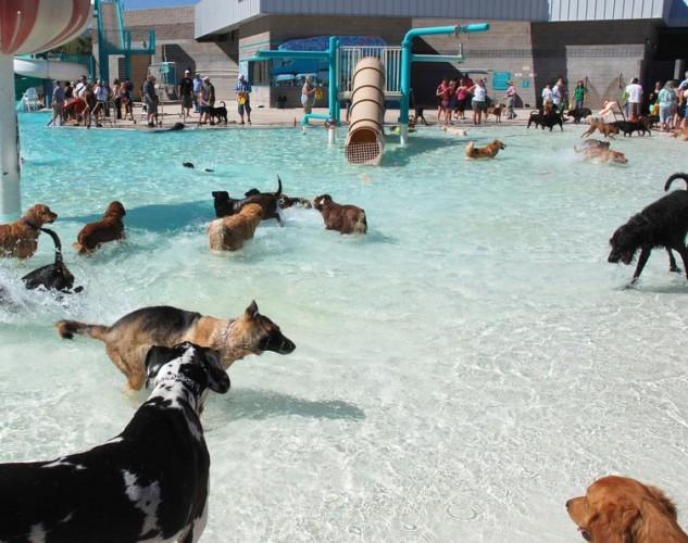 Dog Swim Days