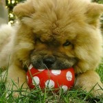 Why Dog Toys are Essential and How to Choose Them
