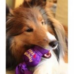 Safety Rankings on Everyday Pup Products