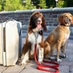 Pet Travel Survey Results + Handy Lists
