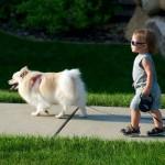 New Study Reveals Surprising Dog Bite Data
