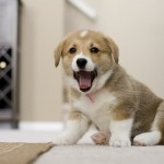 Recent Dog News from Around the World