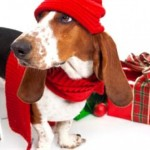 Great Gifts for Good Dogs, Cats and Pet People