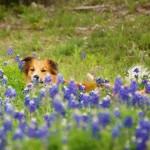Your Dog's Springtime Checklist