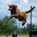 Can Your Dog Fly? She Can With Dock Diving!