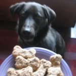 An Easy Holiday Treat to Bake for Your Dog