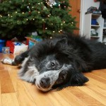 12 Last Minute Gift Ideas for Dog Lovers