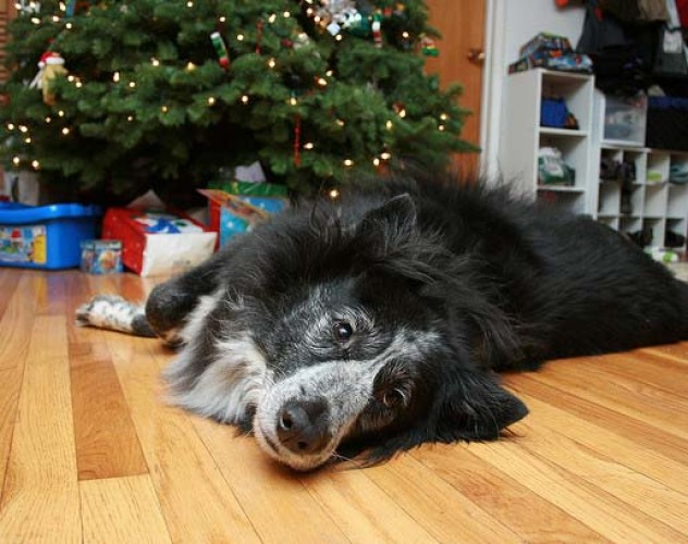 14 Last Minute Gift Ideas For Dog Lovers