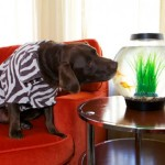 Sniffing Out Dog-Friendly Accommodations